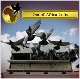 The last of Steven Fouche's stock now on offer on outofafricalofts.co.za  Some very well bred birds available from some of the world's Top fanciers, including Florea Sorin, Hardy Kruger, etc. Do not miss this opportunity.