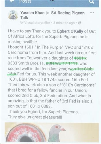 Testimonial from Yaseen Kahn. He purchased two pigeons from us that are breeding him superb winners and racers from our VAN RHYN CLOECK LINES, as well as our SUPERBREEDER 810 LINES. Thank you kindly for your feedback. We welcome feedback! THANK YOU.